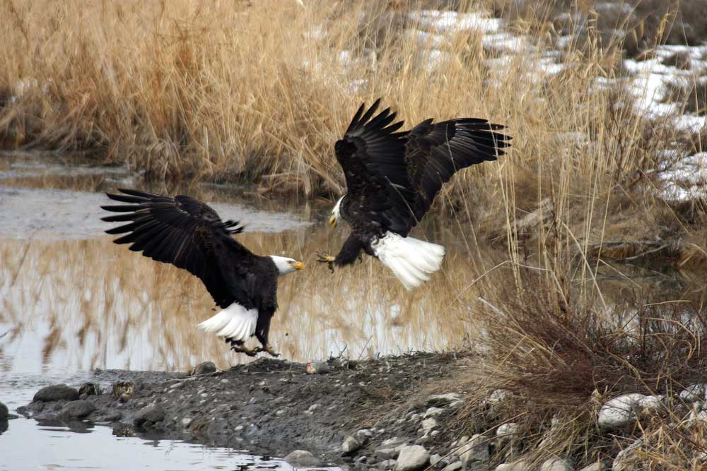 Eagle Pictures  || Nature Pictures
